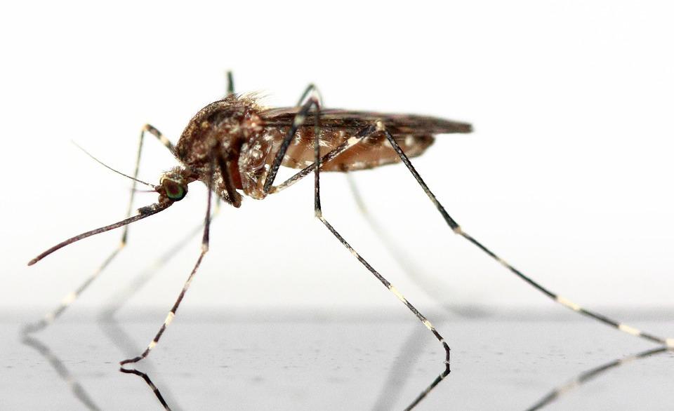 Zo kun je rustig slapen en houd je muggen op afstand