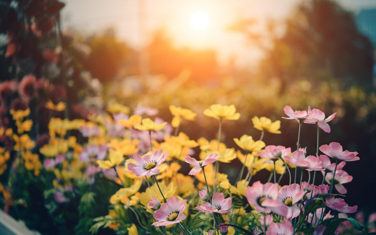 Het prieel als behandelkamer; wat depressie en tuinieren gemeen hebben